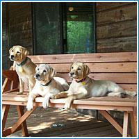 Puppy Raisers
