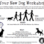 YourNewDogWorkshop